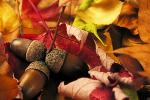1 października - Międzynarodowy Dzień Osób Starszych [© Kristian Peetz - Fotolia.com]