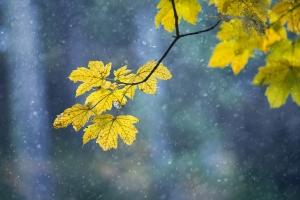 5 prostych sposobów na jesienną chandrę [Fot. robsonphoto - Fotolia.com]