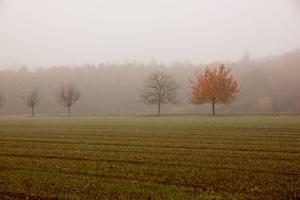 6 sposobów na sezonową depresję. Jak walczyć z SAD [© Ingairis - Fotolia.com]