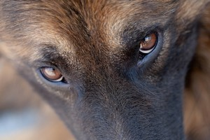 Adoptuj psa. Internet pomoże  [© funnyboy745 - Fotolia.com]