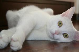 Alergia na koty - odkryto mechanizm uczulenia [© 3gatti - Fotolia.com]