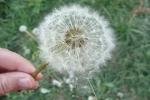 Alergia w pytaniach i odpowiedziach [fot. Aleksandra Gacka]