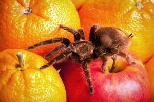 Arachnofobia wyleczona - pacjentowi wycięto część mózgu [© FikMik - Fotolia.com]