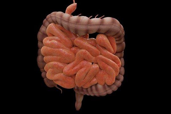 Bakterie jelitowe mają wpływ na szybkość procesu starzenia się [fot. JimCoote from Pixabay]
