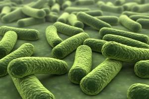 Bakterie w jelicie pomagają walczyć z rakiem [Fot. norman blue - Fotolia.com]
