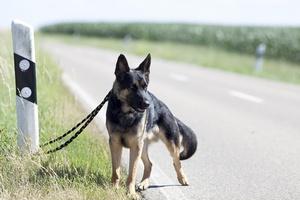 Bezpańskie psy i koty - ważny problem społeczny [© anjajuli - Fotolia.com]