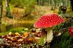 Bezpieczne grzybobranie - pamiętaj o zasadach [© IKO - Fotolia.com]