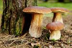 Bezpieczne grzybobranie [© T.Tulic - Fotolia.com]