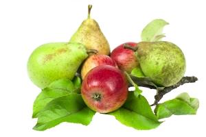 Białe warzywa i owoce uchronią przed udarem [Fot. Uladzimir Martyshkin - Fotolia.com]
