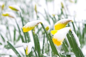 Białe święta? Wielkanoc pod śniegiem [© smikeymikey1 - Fotolia.com]