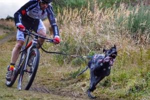 Bikejoring, czyli rower psem napędzany [Fot. materiały prasowe]