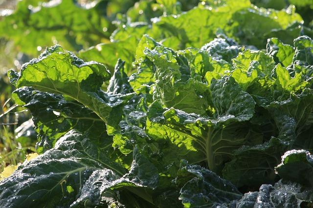 Choroby serca - zielone warzywa liściaste je powstrzymają [fot. PurpleOwl from Pixabay]