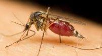 Co robić po ugryzieniu przez owady