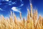 Coraz droższa żywność. Najbardziej rosną ceny zbóż i cukru [© itestro - Fotolia.com]