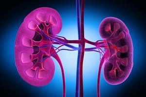 Cukrzycowe uszkodzenie nerek  [© psdesign1 - Fotolia.com]