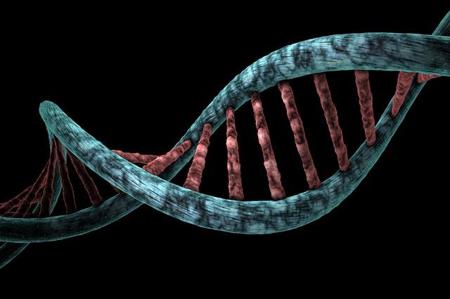 Ćwiczenia chronią DNA i dlatego zapobiegają chorobom [fot. Miroslaw Miras from Pixabay]