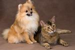 Czego możemy nauczyć sie od naszych zwierząt cz. II [© Ulf - Fotolia.com]