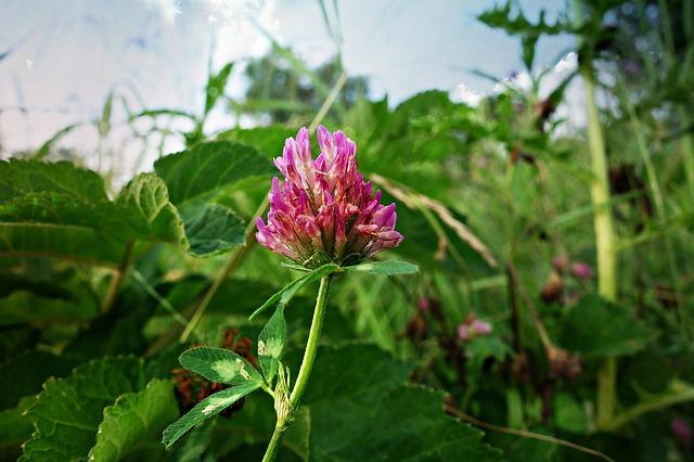 Czy zioła pomogą na objawy menopauzy? [fot. Mabel Amber from Pixabay]