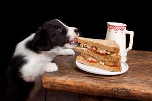 Czym nie należy karmić psa? [© Anyka - Fotolia.com]