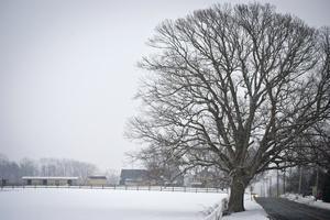 Dieta z potasem na zimową chandrę. To działa! [© Andrew Kazmierski - Fotolia.com]
