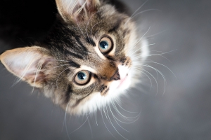 """Dlaczego koty """"ugniatają"""" nas łapami [Fot. fantom_rd - Fotolia.com]"""