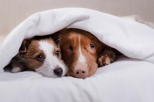 Dlaczego towarzystwo psów jest dobre dla zdrowia [Fot. annaav - Fotolia.com]