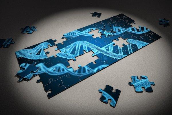 Długość życia - ile zależy od genów? [fot. Arek Socha from Pixabay]