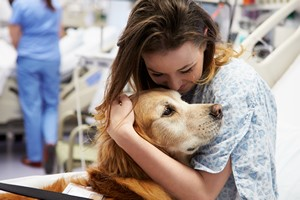 Dogoterapia: terapeuci na czterech łapach [© Monkey Business - Fotolia.com, Dogoterapia]