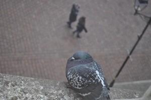 Dokarmianie ptaków latem - dobre czy złe? [fot.birdsystem]