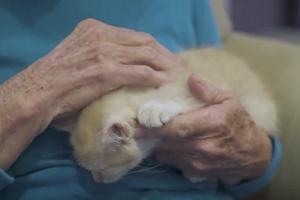 Dom spokojnej starości i schronisko dla kotów w jednym: to działa! [FILM] [fot. YouTube]