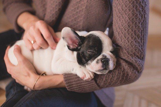 Domowe zwierzęta pomagają przetrwać izolację [fot. Pexels from Pixabay]