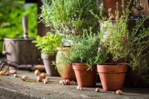 Domowy zielnik: świeże i aromatyczne przyprawy poza sezonem [Fot. shaiith - Fotolia.com]