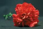 Dzień Kobiet - miła tradycja czy relikt minionej epoki? [©  Sergey Kharitonov - Fotolia.com]