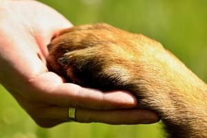 Dzień Psa - Dzień Przyjaciela [©  tonda55 - Fotolia.com]