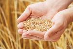 Ekologiczna żywność droga nie bez powodu? [© Alex Vasilev - Fotolia.com]