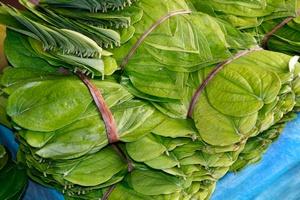 Ekstrakt z orzechów palmy arekowej odmładza mózg [©  ferretcloud - Fotolia.com]