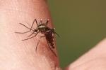 Epidemie - to się dzieje w XXI wieku [© Witold Krasowski - Fotolia.com]