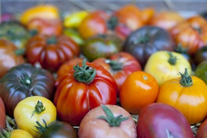 Fioletowe pomidory są zdrowsze i dłużej można je przechowywać [©  auryndrikson - Fotolia.com]