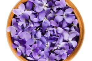 Fiołki: jadalne, wiosenne kwiaty. Przepis na zupę [Fot. materiały prasowe]