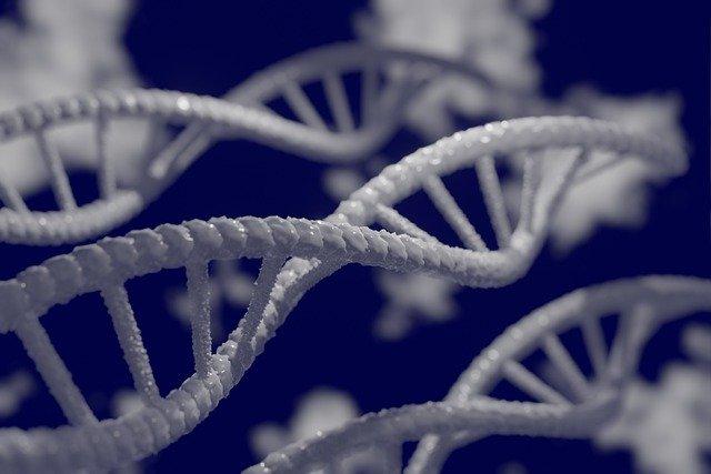 Gen związany z demencją sprzyja powaÅźnej formie COVID-19 [fot. Mahmoud Ahmed from Pixabay]