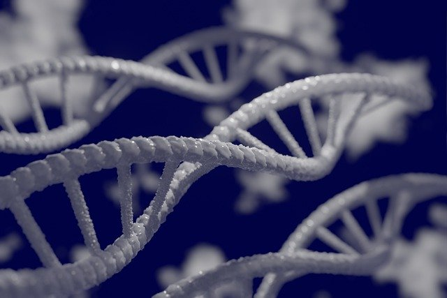 Gen związany z demencją sprzyja poważnej formie COVID-19 [fot. Mahmoud Ahmed from Pixabay]