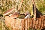 Grzyby: ryzykowne przysmaki. Uwaga na zatrucia [© shaiith - Fotolia.com]