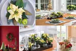 Gwiazda betlejemska ozdobą stołu - świąteczne dekoracje z poinsecją w roki głównej [fot. Stars for Europe]