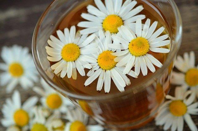 Herbata rumiankowa pomaga osłabić powikłania cukrzycy [fot.  congerdesign from Pixabay]