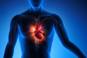 Im bardziej otłuszczone serce, tym większe ryzyko jego niewydolności [Fot. psdesign1 - Fotolia.com]