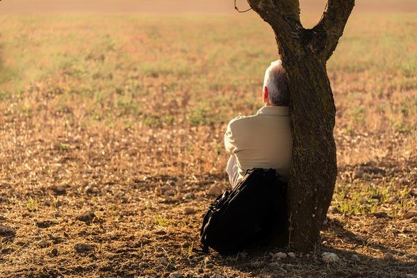 Im więcej drzew w najbliższym otoczeniu, tym lepiej dla zdrowia [fot.  Jose Antonio Alba z Pixabay]