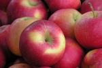 Jabłka znacząco redukują cholesterol u dojrzałych kobiet [© Maria Brzostowska - Fotolia.com]