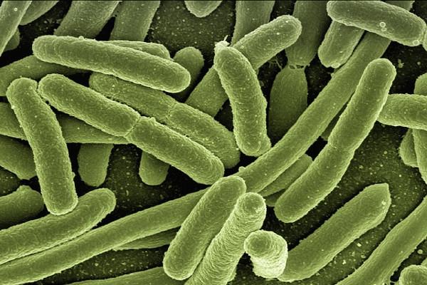 Jak bakterie w jamie ustnej mogą wpływać na ryzyko udar [Fot. Pixabay.com]
