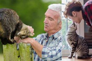 Jak koty kochają ludzi. Bardziej niż nam się wydaje [fot. collage Senior.pl]