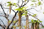 Jak mogą sobie pomóc alergicy [© koi88 - Fotolia.com]